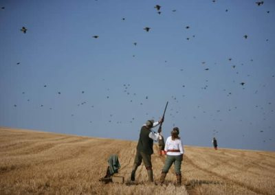 Pawton Manor – Partridge Shooting – Cornwall
