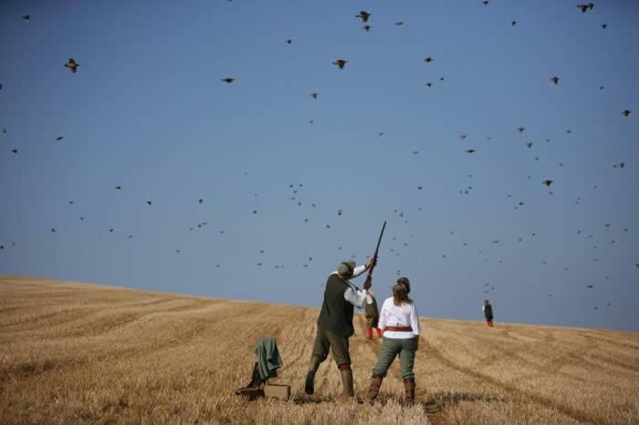 Pawton Manor – Partridge Shooting – Cornwall