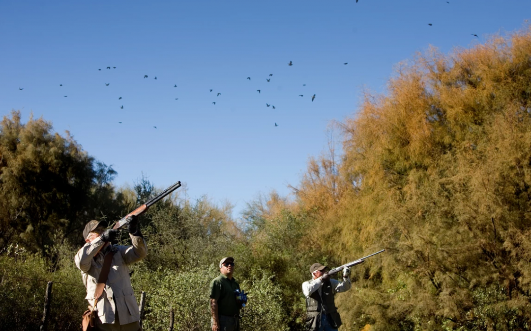 Argentina – High Volume Dove Shooting – 5 Days – Including Cartridges – £5400