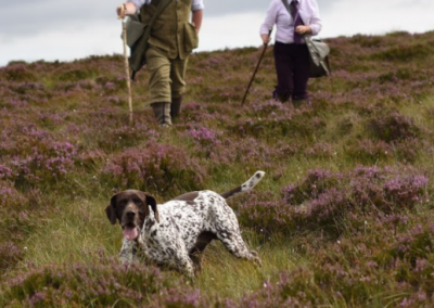Grouse Shooting Over Pointers – Thurso –  From £300